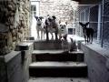 Bella, Ballzac, Duke, Coco and Gertie