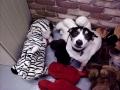 Brady likes the stuffed animals