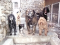 Midnight, Cheyenne, Gertie, Duke, Bella, Thistle, Henry and Bitzy saying Feed Us