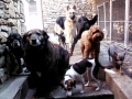 Midnight, Cheyenne, Gertie, Trixie, Duke, Thistle, Henry and Bitzy