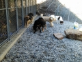 Millie, Penny, Thistle, Zoe, Lucy and Rex